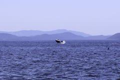 Wieloryby spoting przy orki wyspą Washington obrazy stock