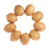 Wieloskładnikowi kiwifruits wyrównujący w okręgu Fotografia Stock