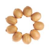 Wieloskładnikowi kiwifruits wyrównujący w okręgu Zdjęcie Stock