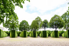 WIEN, ÖSTERREICH - 15. MAI 2016: Grünes Labyrinth an schonbrunn Garten Stockfotografie
