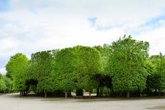 WIEN, ÖSTERREICH - 15. MAI 2016: Grünes Labyrinth an schonbrunn Garten Stockbild
