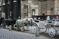 Wien, Dom. Horses near the dom from Wien Stock Photography