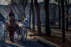 Wien klassikervagnshäst Royaltyfri Bild
