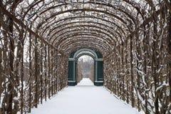Wien - Rosen busch von den Gärten von Schonbrunn im Winter lizenzfreies stockfoto