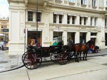 Wien-Straße mit Pferden Österreich Stockbild