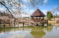 Wien VA Gazebo Meadowlark Regional Park Spring Arkivfoto