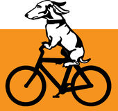 Wiener Dog Riding A Bicycle Royalty Free Stock Image