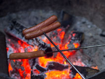 Wiener roast on campfire Stock Images