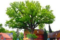 Wienhausen-Kleinstadt Deutschland-Parkbaumblume stockbild