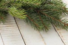 Świerczyna na drewnianym tle. Zdjęcia Stock