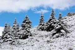Świerkowa drzewna zima Zdjęcia Stock