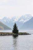 świerkowy drzewo Fotografia Stock