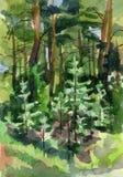 Świerkowy i sosnowy las Zdjęcie Stock