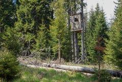 Świerkowy las Zdjęcie Stock