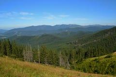 Świerkowy las w górach Zdjęcia Royalty Free