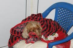 wierny pies Zdjęcia Stock