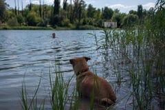 wierny pies Zdjęcia Royalty Free