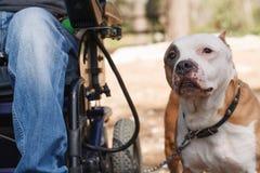 Wierny pies z jego właścicielem. Zdjęcia Royalty Free