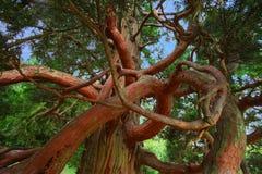 wiersza drzewo Zdjęcia Stock