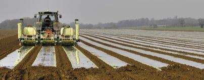 Wiertnicza kukurydza Zdjęcie Royalty Free