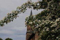 Wierza katedra Kaliningrad Zdjęcie Royalty Free