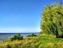 Wierzba blisko Zaporoskiej rzeki Fotografia Stock