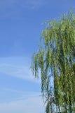 Wierzba i niebieskie niebo Zdjęcia Royalty Free