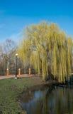 Wierzba na jeziorze Zdjęcia Royalty Free