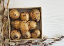 Wierzba, przepiórek jajka Wielkanocni na białym drewnianym pudełku Obrazy Stock