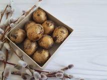 Wierzba, przepiórki miękkości wiosny jajka Wielkanocni na białym drewnianym pudełku Fotografia Royalty Free