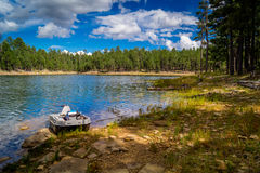Wierzba Skacze jezioro Obrazy Royalty Free