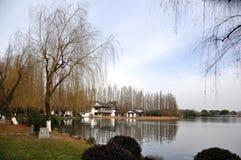 Wierzba w jeziorze Zdjęcia Royalty Free