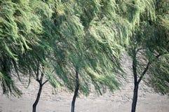 wierzba wiatr Zdjęcia Stock