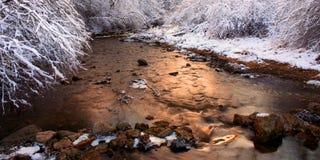 Wierzbowa zatoczki zimy scena Illinois Fotografia Stock