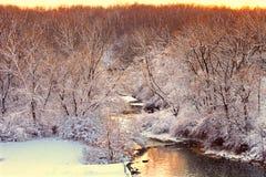 Wierzbowa zatoczki zimy scena Illinois Obrazy Royalty Free