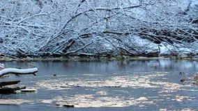 Wierzbowa zatoczki zimy scena Illinois zbiory