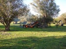 wierzbowego drzewa palenie z wewnątrz zdjęcia stock