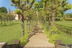 Wierzbowi drzewa, knebworth, England obraz royalty free