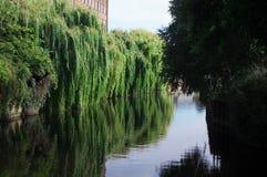 Wierzbowi drzewa wzdłuż rzeki Obrazy Royalty Free