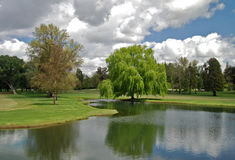 Wierzbowy drzewo jeziorem Fotografia Royalty Free