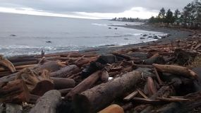 Wierzbowy punktu b C Plaża Zdjęcie Royalty Free