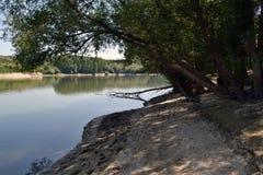 Wierzbowy ulistnienie nad rzeką Obraz Royalty Free
