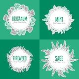 Wierzbowy ziele, fireweed Kwitnie oregano, rosebay, mędrzec, nowa ręka rysujący nakreślenie wektor na bielu, Round rama ilustracja wektor