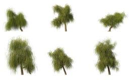 wierzbowych grupowych cg 6 drzew Zdjęcia Royalty Free