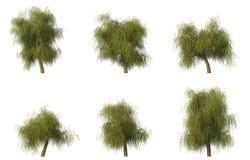 wierzbowych grupowych cg 6 drzew Zdjęcia Stock