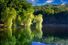 Wierzby na brzeg jezioro obrazy royalty free
