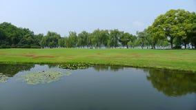 Wierzby z obszarem trawiastym w zachodnim jeziorze Fotografia Royalty Free