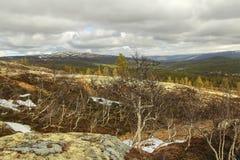 Wierzchołek góra z dancingowymi drzewami zdjęcie stock