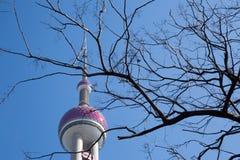 Wierzchołek Perełkowy wierza za bezlistnym drzewem Zdjęcie Stock