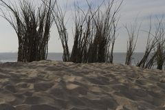 Wierzchołek piaska wzgórza północny morze Fotografia Stock